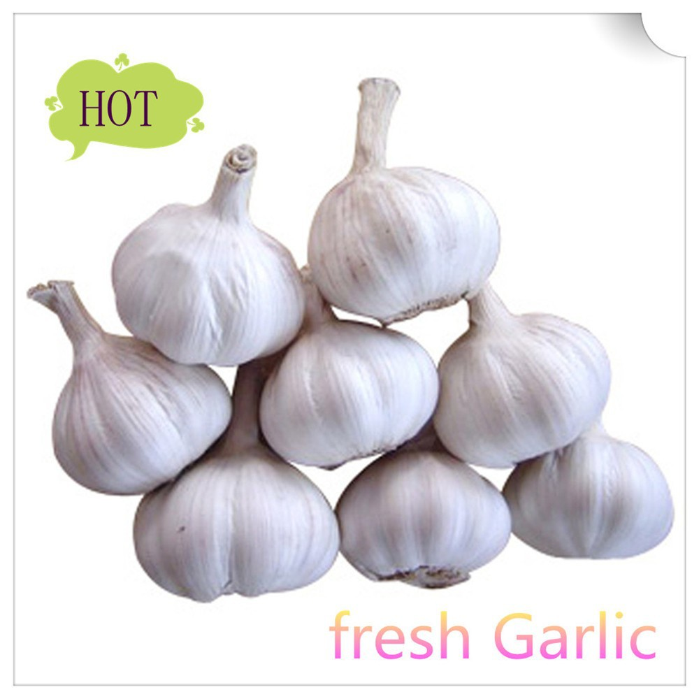 Wholesale China fresh garlic with good quality in China