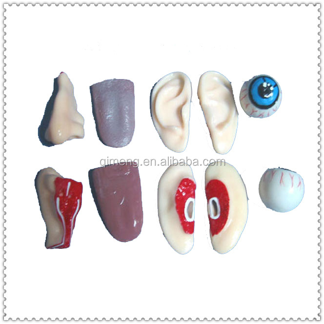 Funny Jokes Toys TPR Sticky Simulation Kidney Organ Model Fake Horror Scary Halloween Body Parts Props