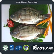 IQF frozen tilapia fish black red tilapia