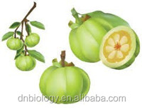 Garcinia Cambogia Extract 60% Herbal Ingredient Supplier Garcinia Cambogia Extract 100% Natural Garcinia Cambogia Extract Powde