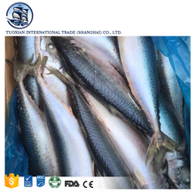 Wholesale king pacific hard tail species of mackerel seafood