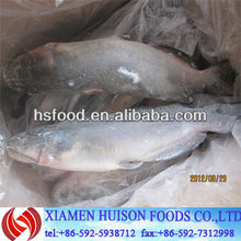 Frozen Whole Round Channel Catfish 800g+