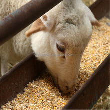 Cattle,Chicken,Dog,Fish,Horse,Pig Use GMP Soybean Meal For Animal Feed