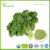 China products fresh vegetable kale leaf powder organic kale for health products