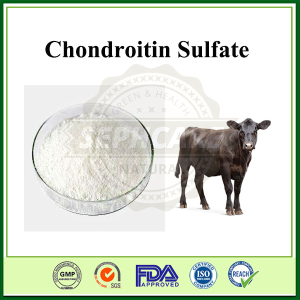 High Quality Medical Grade Chondroitin Sulfate From Bovine
