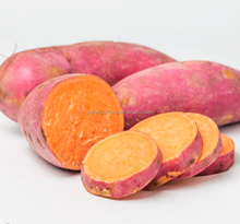 New crop fresh chinese organic purple sweet potato with dirt