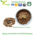 Natrual Health Care Product Maitake Mushroom Extract