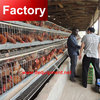 Factory price wire cages for chickens with free layout design