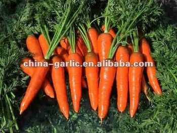 2012 Crop Chinese Carrot packing in 10kg/carton