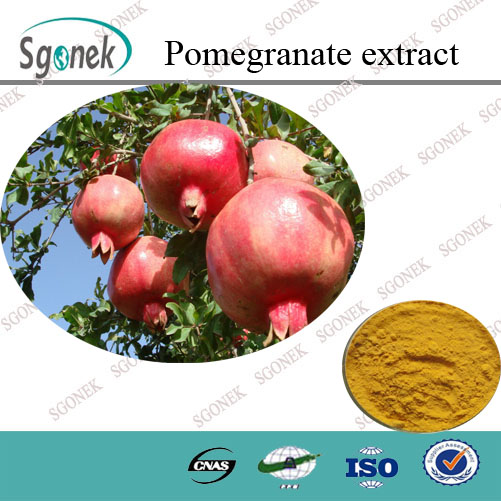 100% natural free sample plant extract Pomegranate Extract