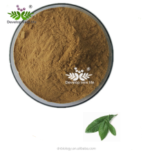 Ursolic Acid 20%-98% HPLC Loquat Leaf Extract With Kosher Halal ISO22000 Certificate