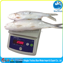 MILKFISH WHOLE ROUND Healthy fish seafood free of impurities