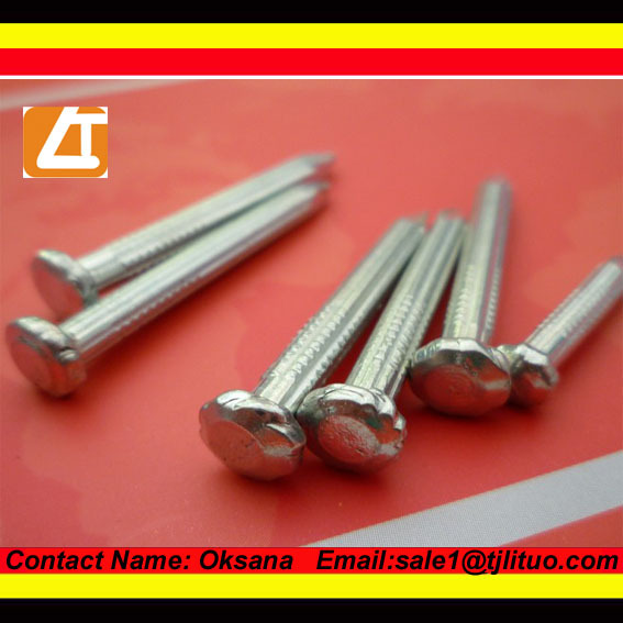 Good quality galvanized concrete steel nails, concrete nails, spiral shank nails