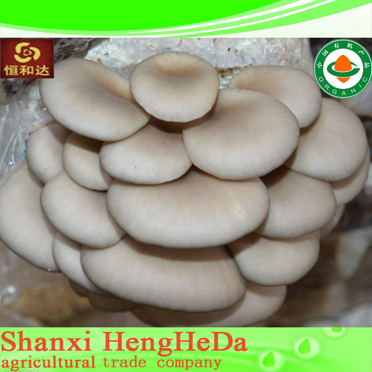 original used wholesale factory directly market prices for mushroom in bag