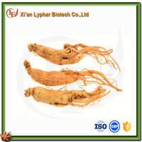 High Quality Pure Fresh Ginseng Root