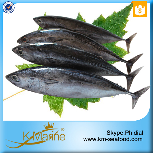 Tuna for sea food importers