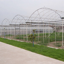 Low Cost Wholesale Agriculture Used Greenhouse Frames For Sale