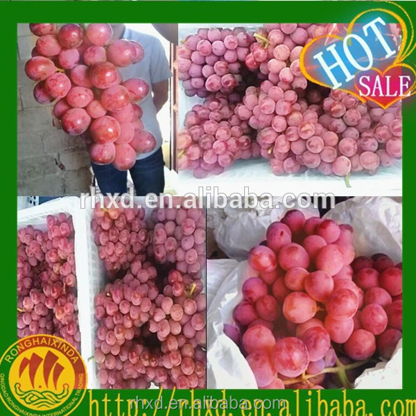 Fresh Red Globe Grape Price FOR BANGLADESH, THAILAND, INDONESIA