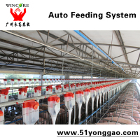 automatic machine pigs farming feeder in sow farm sow feeding