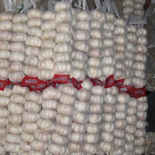 wholesale fresh garlic buyers garlic price