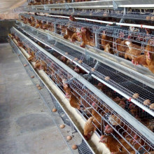 chicken cages for layer rearing