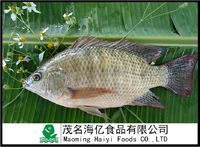 Hot Sale IQF Frozen Tilapia Fish Whole Round 300-500G