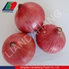 /product-detail/newest-crop-fresh-chinese-onions-for-global-market-575702542.html