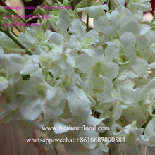International Wholesale Baby Orchid Flower And Vanda Orchid And Champagne Avalache Roses For Party Favors Decorations