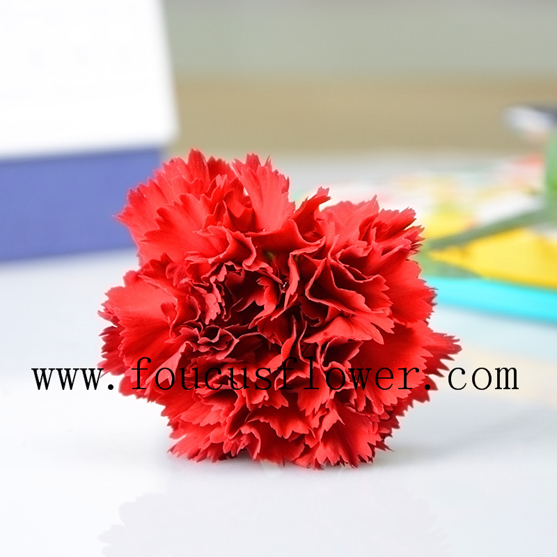 Many Types Best Selling Red Carnation Flower Alibaba Kenya Flower Import Agent