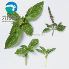 Manufacture factory product high Quality Pure Natural Basil Extract/ Free Sample/ Competitive Price!!!