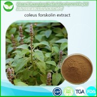 High quality forskolin powder / coleus forskolin extract
