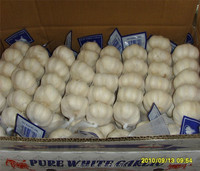High grade china wholesale natural garlic
