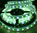 High quality good price epistar chip RGBW led strip 5050