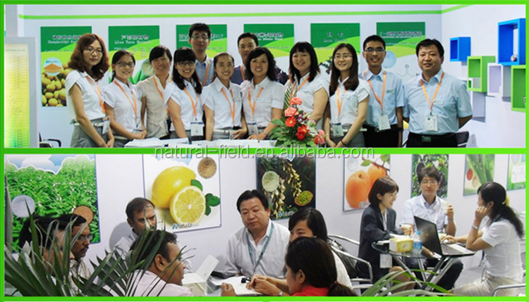 100% Pure Natural 10%,10:1 Bitter Melon Extract Manufacturer