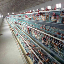 egg poultry farm/big dutchman poultry equipment/poultry cages for sale in nigeria