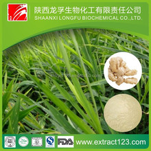 Manufacturer Supply Ginger Oil Extract Machine