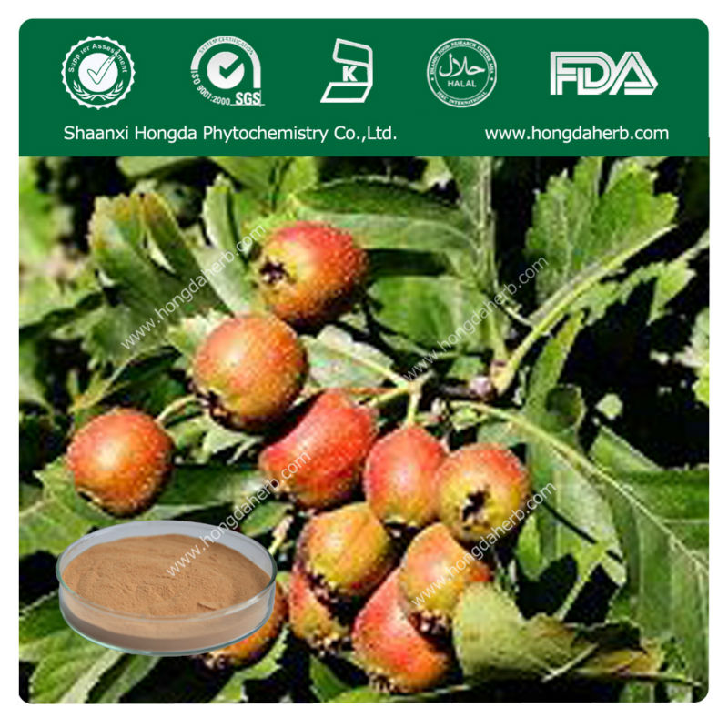Very Hot Selling Hawthorn Berry Leaf Extract