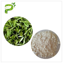 Green Tea Extract Polyphenols EGCG 98% for Weight Loss