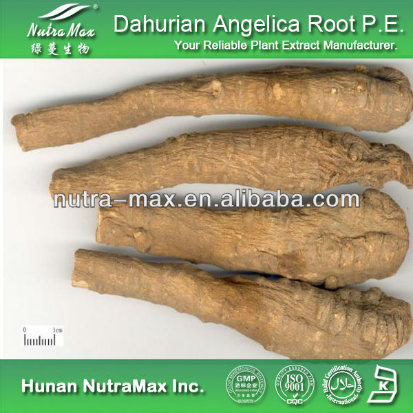 Natural Dahurian Angelica Root Extract, Dahurian Angelica Root Extract Powder, Dahurian Angelica Root P.E.