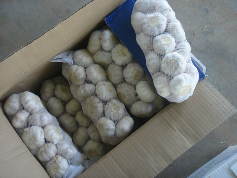 2017 Jixiang Fresh Garlic from Shandong China