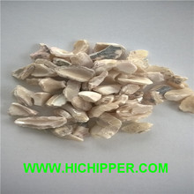 Natural esmagado shell chips