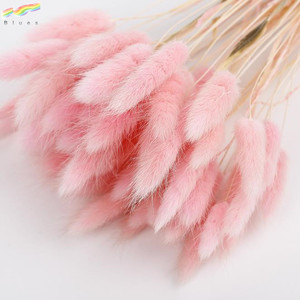 Dried flower bouquet colorful lagurus ovatus rabbit tail grass flower set of 50pcs flower