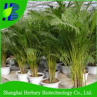 Hot sale areca palm seeds for sale