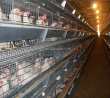 light steel layer egg chicken cage/steel structure poultry farm shed
