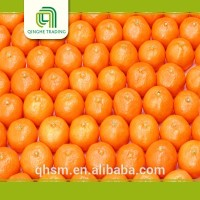 Hot selling nanfeng orange with great price fresh blood orange