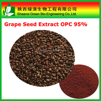 Natural food supplement grape seed extract capsules Proanthocyanidins/CAS 84929-27-1