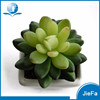 mini potted succulent plants for home decorations / garden decorations
