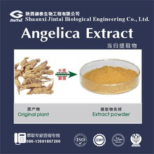 Pure Natural 20:1 Chinese angelica / angelica root extract