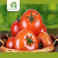 Brand new hybrid tomato with low price