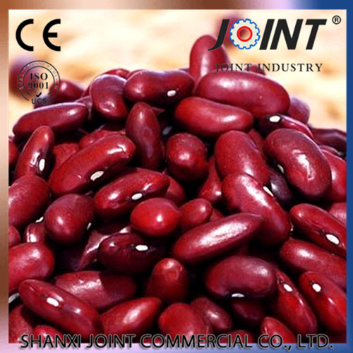 supply Dark red kidney beans with best price for sale